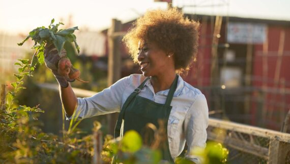 young african american woman inpsecting beets just pulled from t